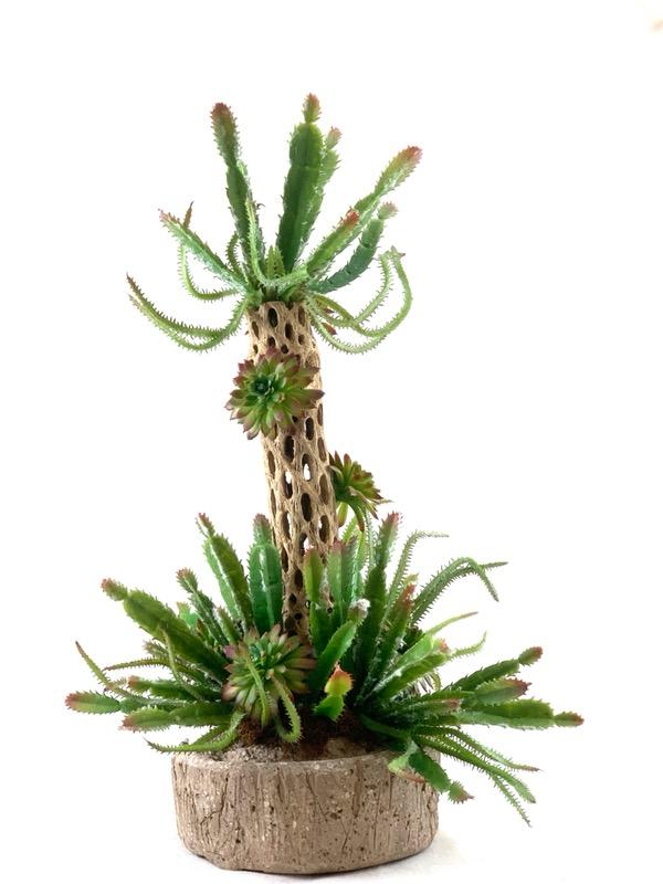 Sonoran Holiday, Ana Thompson Botanical Art, Rogoway Gallery