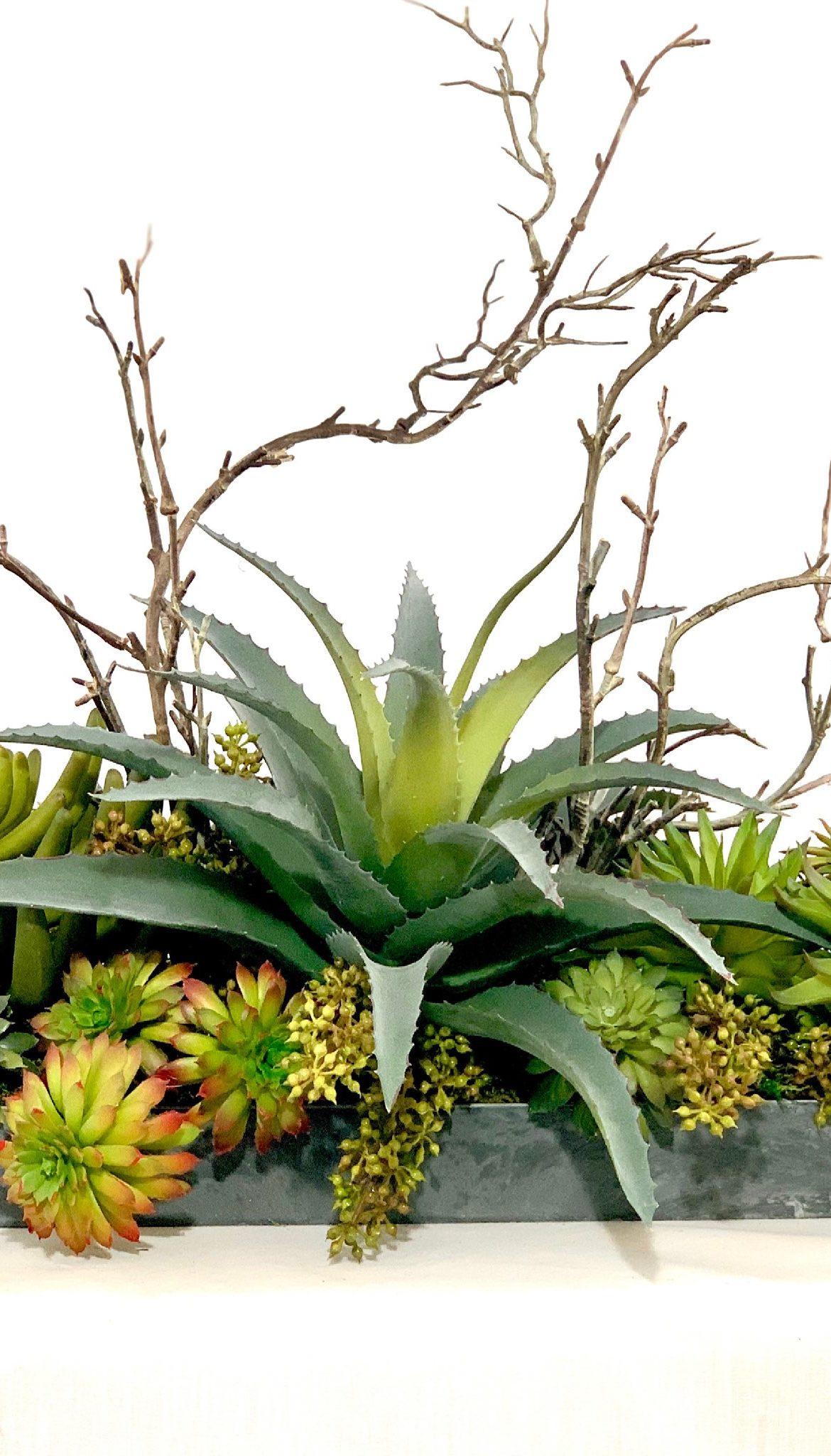 Vortex, Ana Thompson Botanical Art, Rogoway Gallery