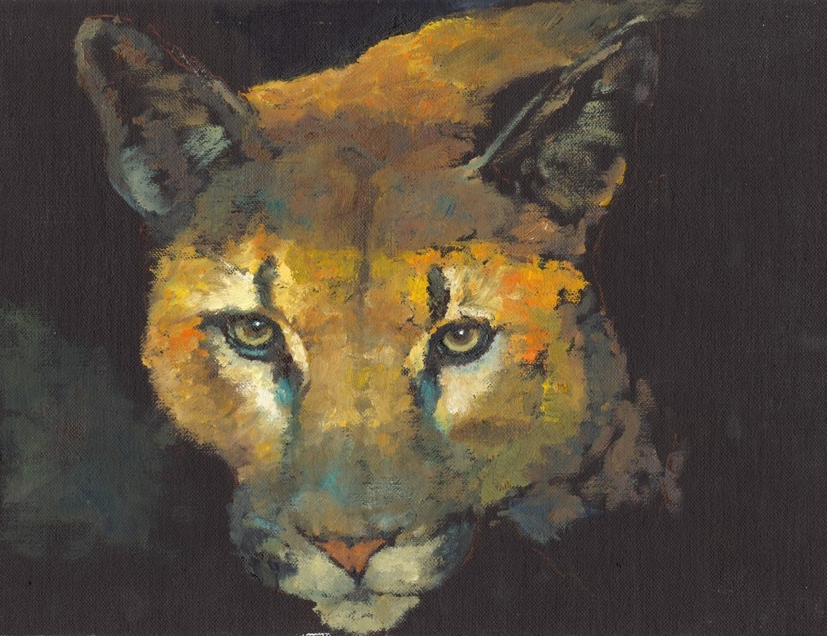 Eye of the Cat, Jim Hollon, Painting, Rogoway Gallery