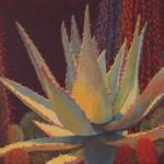 Desert Garden #23, Sharon Weiser, Rogoway Gallery