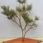 Palo Verde Tree, Thomas A. Tankersley , Sculpture, Rogoway Gallery